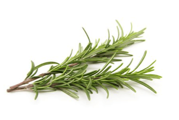rosemary hair loss growth herb