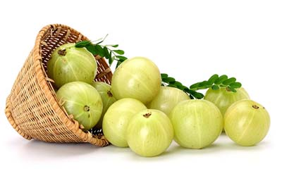 Phyllanthus Emblica indian gooseberry amla fruit extract